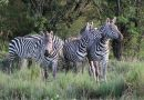 Kenya Tourism- Exclusive Wildlife Photos Set 5