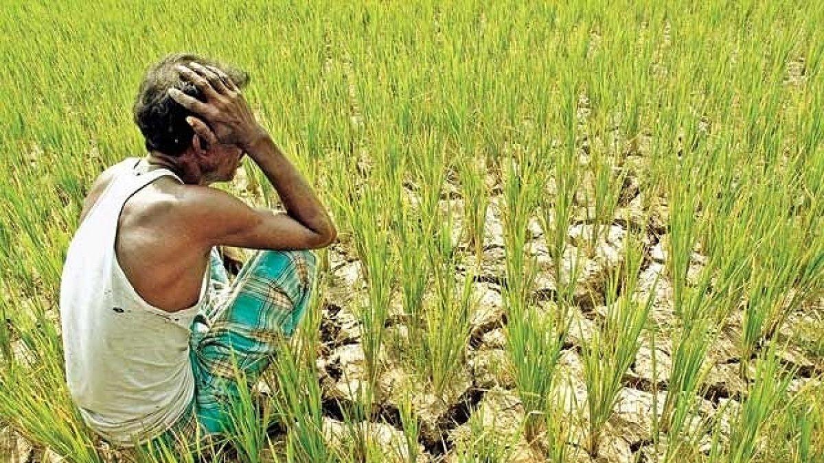 ગુજરાતના ખેડૂતો પર 90 હજાર કરોડનું દેવું, સરકારે કહ્યું 'દેવું માફ નહીં થાય'