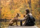 Petting dogs, cats may reduce stress in students